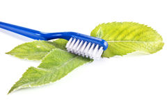 Toothbrush and leaves of mint Stock Image