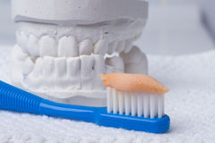 Toothbrush with paste and dental gypsum Stock Images