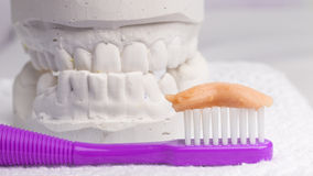 Toothbrush with paste and dental gypsum Royalty Free Stock Images