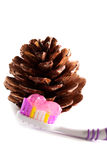 Toothbrush and pine cone. Toothbrush with toothpaste and pine cone close up on white background Royalty Free Stock Photo