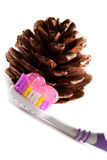 Toothbrush and pine cone closeup. Toothbrush with toothpaste and pine cone closeup on white background Stock Images