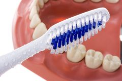 Toothbrush and teeth Stock Images