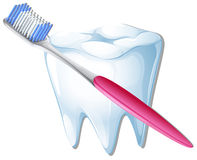 A toothbrush and a tooth Stock Photo