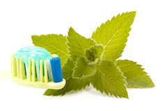 Toothbrush, toothpaste and fresh leaves of mint Royalty Free Stock Photos