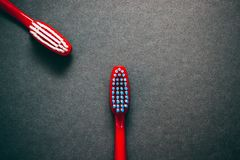 Toothbrushes on a dark background. Spring has finally arrived. The first flowers make us happy stock images