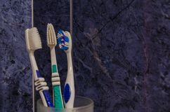 Toothbrushes in a glass stock photography