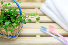Toothbrushes and plants Royalty Free Stock Photography