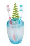toothbrushs папоротника Стоковое Фото