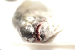Toothfish heads and white Royalty Free Stock Images