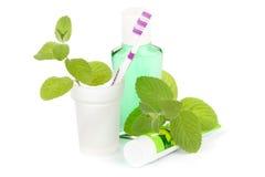 toothpaste för leavesminttandborste royaltyfri bild