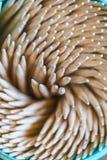 toothpicks fotografía de archivo libre de regalías