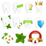 Tooths Set Stock Images