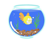 Toothy goldfish in a fishbowl. Toothy yellow fish in a fishbowl among soil and algae Stock Photo