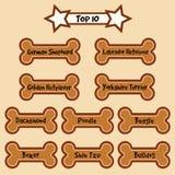 Top 10 Most Popular dog Breeds Royalty Free Stock Photos