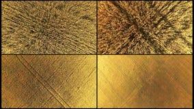 Top aéreo del collage abajo de la vista del trigo de oro suavemente Un collage de las imágenes de vídeo 4 del trigo de oro se tir almacen de metraje de vídeo
