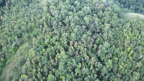 Top abajo de la imagen aérea del abejón de un bosque de hojas caducas y conífero mezclado verde enorme almacen de metraje de vídeo
