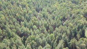 Top abajo de la imagen aérea del abejón de un bosque de hojas caducas y conífero mezclado verde enorme metrajes
