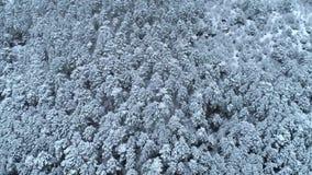 Top abajo de la vista del tiro conífero nevado joven del bosque Fondo de árboles coníferos nevados Invierno metrajes