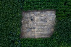 Top aerial view in tropical forest. Deforestation - top aerial view in tropical forest. Background with copy space stock photography