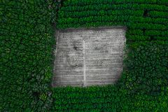 Top aerial view in tropical forest. Deforestation - top aerial view in tropical forest. Background with copy space stock images