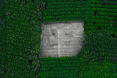 Top aerial view in tropical forest. Deforestation - top aerial view in tropical forest. Background with copy space royalty free stock images