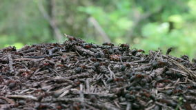 Top of the ants nest stock footage