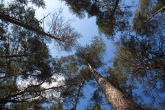 Top of autumn forest trees. Nature green wood and blue sky sunli Royalty Free Stock Image