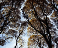 Top of autumn forest, yellow leafs clouds sky, silhouette texture Stock Images