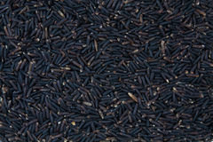 Top black rice Royalty Free Stock Images
