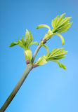 Top of blooming twig Stock Photo