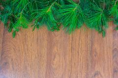 A top border of white pine, tamarack, and spruce branches. A border along the top of white pine, tamarack, and spruce branches and copy space for your message stock photos