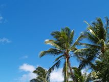 Top Branches of Palm Trees with Copy space Royalty Free Stock Image