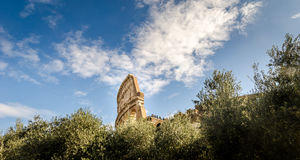 Top of the colosseum above the trees Stock Photos