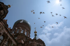 Top Cross Church. Top Cross Cathedral in St. Petersburg and Pigeons royalty free stock photo