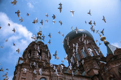 Top Cross Church. Top Cross Cathedral in St. Petersburg and Pigeons royalty free stock images