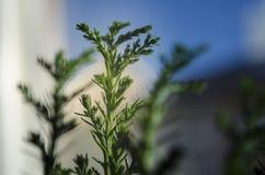 Top de la planta verde en natore con la falta de definición del contexto y del fondo en espacio vacío imagenes de archivo