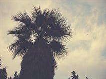 Top de una palmera en la oscuridad, perspectiva del ángulo bajo; estilo descolorado, retro fotos de archivo libres de regalías