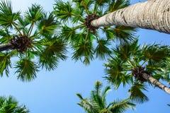 Top del árbol fotografía de archivo libre de regalías
