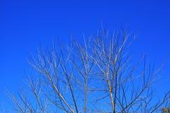 Top del árbol con el cielo azul Fotografía de archivo