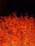 Top del árbol de las luces de la noche fotos de archivo