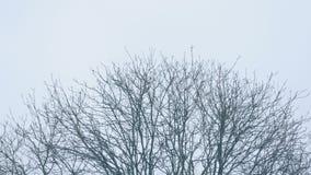 Top del árbol en invierno almacen de metraje de vídeo