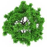 Opinión superior del árbol stock de ilustración
