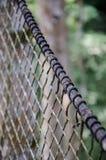 Top del árbol o paseo suspendido del toldo en la selva tropical de Nigeria en el rancho del taladro de la montaña de Afi Fotos de archivo libres de regalías