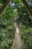 Top del árbol o paseo suspendido del toldo en la selva tropical de Nigeria en el rancho del taladro de la montaña de Afi Imagen de archivo libre de regalías