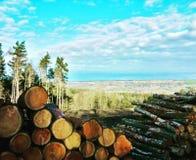 Top del bosque que mira abajo en el valle Imagen de archivo libre de regalías