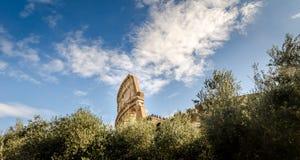Top del colosseum sobre los árboles Fotos de archivo