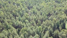 Top down aerial drone image of a lush green mixed deciduous and coniferous forest. Top down aerial drone image of a lush green mixed deciduous and coniferous stock footage