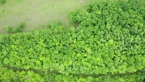 Top down antenne van een dicht bos wordt geschoten dat stock video