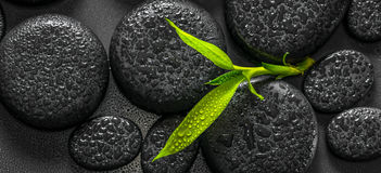 Top down closeup beautiful spa composition of green branch bamboo on zen basalt stones with dew, panorama stock photos
