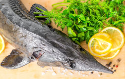 Top down of fresh raw sturgeon fish with greens, lemon, differen Royalty Free Stock Photo